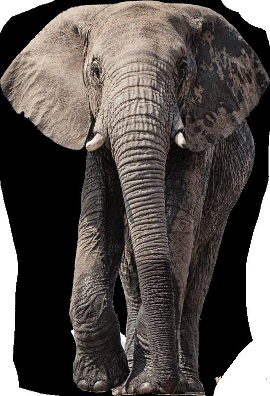 frontpage-carousel-bg-04-elephant